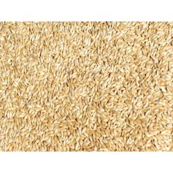Canary Seed- Alpiste for humans 4 lbs.